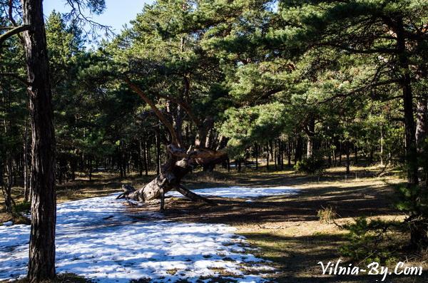 От прогулок по сосновому лесу можно получать удовольствие с ранней весны и до поздней осени.