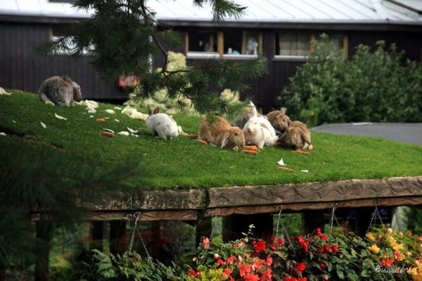 Если хотите понаблюдать за кроликами, лучше просить проситьстолик на втором этаже основного здания ресторана. Фото buvauten.lt.